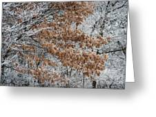 Hoarfrost Trees Greeting Card