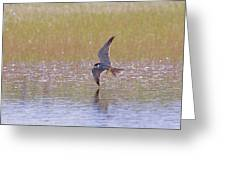 Hobby Skimming Water Greeting Card