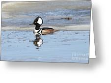 Hodded Merganser With Reflection Greeting Card