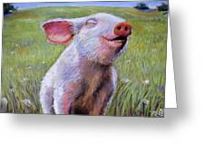 Hog Heaven Greeting Card