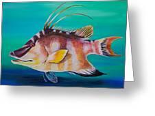 Hogfish Greeting Card