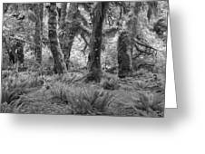 Hoh Rain Forest 3371 Greeting Card