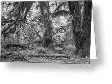 Hoh Rain Forest 3381 Greeting Card