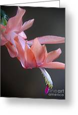 Holiday Cactus - Gliding Greeting Card