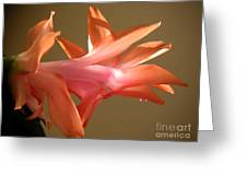 Holiday Cactus - In Morning Light Greeting Card