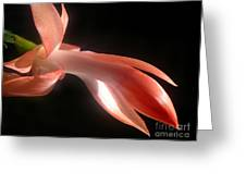 Holiday Cactus - In Silhouette Greeting Card