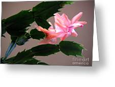 Holiday Cactus - On Wings Greeting Card