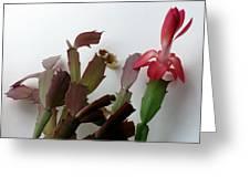 Holiday Cactus 4 Greeting Card