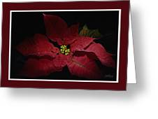Holiday Poinsettia Greeting Card