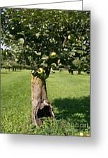 Hollow Apple Tree Greeting Card