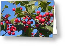 Holly Berries On A Wintry Day I Greeting Card