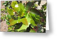 Holly Leaves Greeting Card