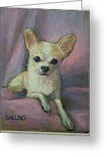 Holly The Chihuahua Greeting Card