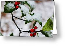 Holly Tree And Snow Greeting Card