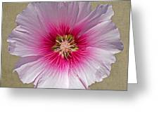 Hollyhock On Linen 2 Greeting Card