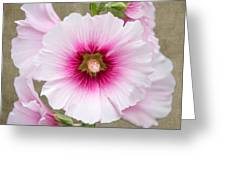 Hollyhock On Linen Greeting Card