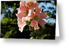 Hollyhocks 1 2017 Greeting Card