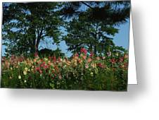 Hollyhocks And Trees Greeting Card