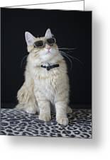 Hollywood Cat Greeting Card
