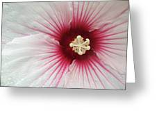 Holy Hibiscus Greeting Card