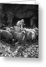 Holy Land: Shepherd, C1910 Greeting Card