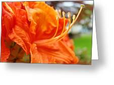 Home Decor Orange Rhodie Flower Art Print Baslee Troutman Greeting Card