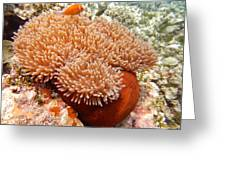 Home Of The Clown Fish 2 Greeting Card