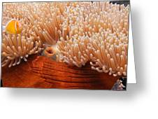 Home Of The Clown Fish 3 Greeting Card