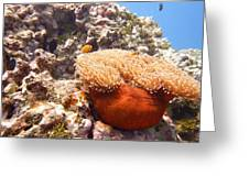 Home Of The Clown Fish 4 Greeting Card