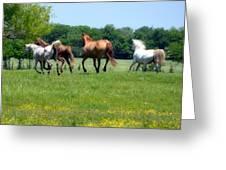 Home On The Range II Greeting Card