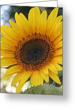 Homegrown Sunflower Greeting Card