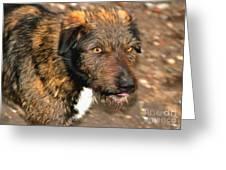 Homeless Dog Charlick Greeting Card