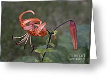 Homestead Tiger Lilly Greeting Card