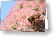Honey Bee 3 Greeting Card