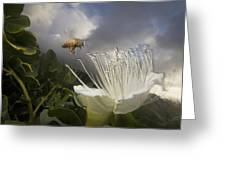 Honey Bee Apis Mellifera Approaching Greeting Card by Mark Moffett