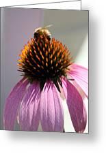 Honey Bee At Work Greeting Card
