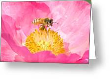 Honey Bee Collecting Pollen Greeting Card