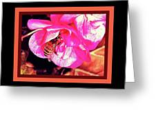 Honey Bee In A Pink Flower Greeting Card