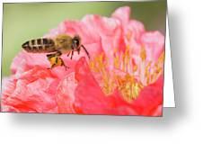 Honey Bee In Flight Greeting Card