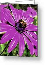 Honey Bee On A Spring Flower Greeting Card