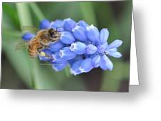 Honey Bee On Blue Flowers Greeting Card