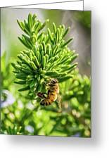 Honey Bee On Bush Greeting Card