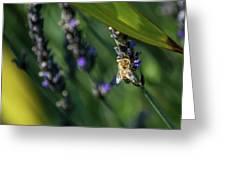 Honey Bee On Flower #4 Greeting Card