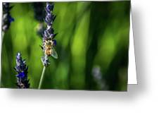 Honey Bee On Flower #5 Greeting Card