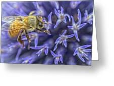 Honey Bee On Globe Allium Greeting Card