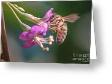 Honey Bee On Goji Berry Flower Greeting Card