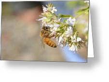 Honey Bee On Herb Flowers Greeting Card