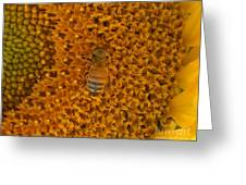 Honey Bee On Sunflower Greeting Card