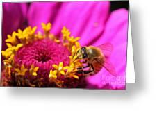 Honey Bee Pollinating Zinnia Greeting Card