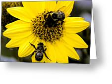 Honey Bees Greeting Card
